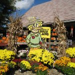 sonny acres farm pumpkin patch fall fun