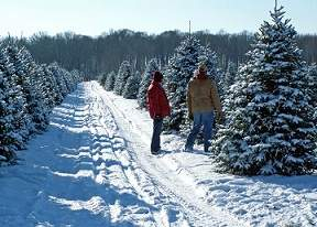 Christmas Tree Farms near Chicago