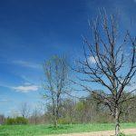 Blackwell Off-Leash Dog Park Warrenville