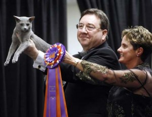 cat show dupage events