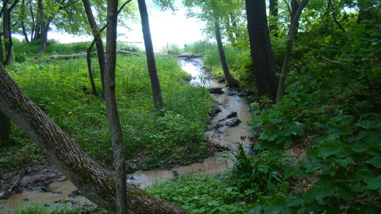 A creek forms from rain run-off at Starved Rock.