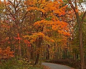 Autumn Fest Arbortum Lisle