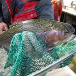 Trout Season Begins October 15th at Blackwell Forest Preserve