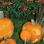 Cantigny Fall Festival Saturday