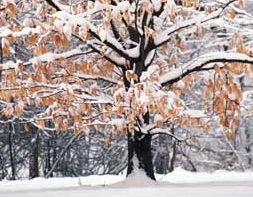 How to Winter-Ready Your Trees