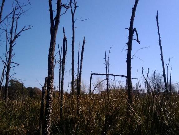 Marsh at Lyman Woods