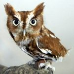 "Morton Arboretum Hosts ""Family Owl Adventure"" Event"