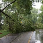 Trees Down in Wheaton Storm