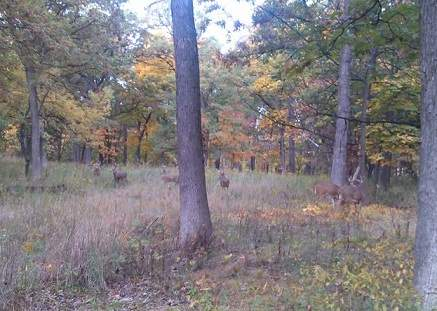 Video of Deer Grazing at Lyman Woods in Downers Grove