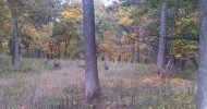Video of Deer Grazing at Lyman Woods in Downers Grove
