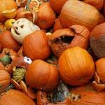 dupage pumpking recycling event